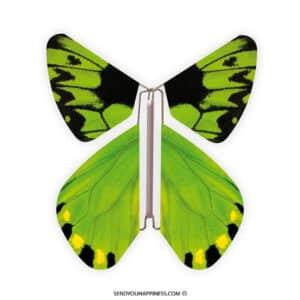 Magic Vlinder Nature Birdwing copyright sendyouhappiness.com
