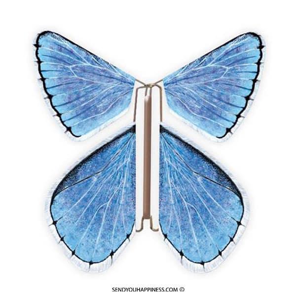 Magic Vlinder Nature Chalkhill Blue copyright sendyouhappiness.com