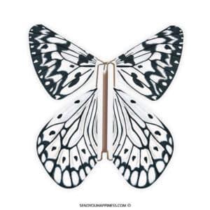 Magic Vlinder Nature Leuconoe copyright sendyouhappiness.com