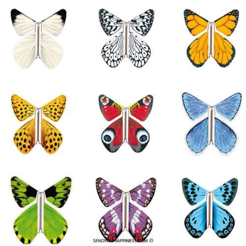 Magic Vlinder Nature Assortiment copyright sendyouhappiness.com